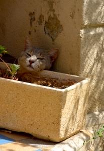 Provence Katze