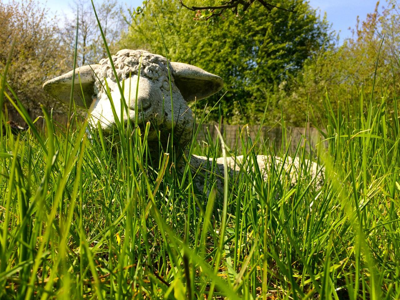 Garten Schaf