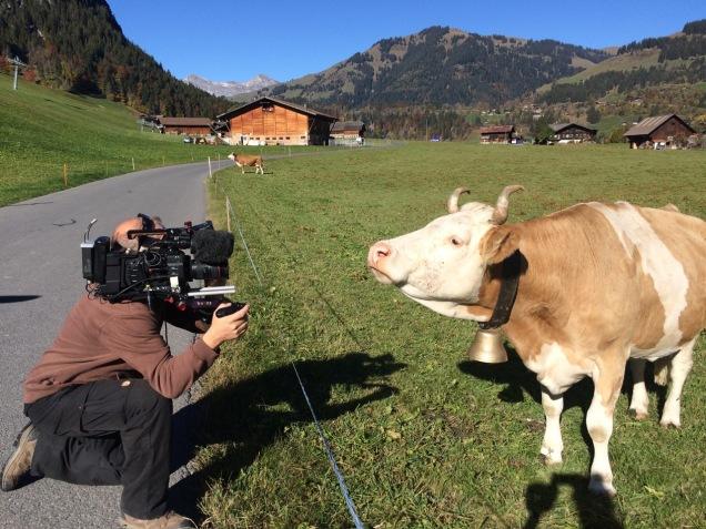 Schweiz Kuh