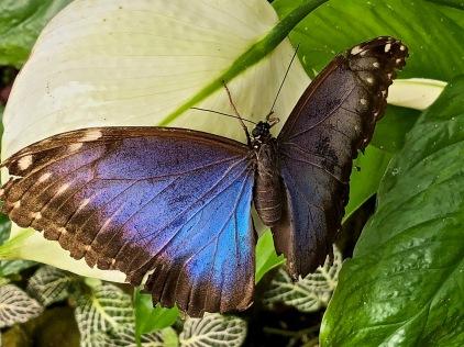 Blog Schmetterling 1