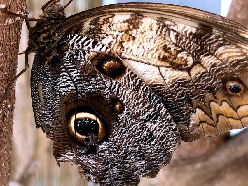 Blog Schmetterling 3
